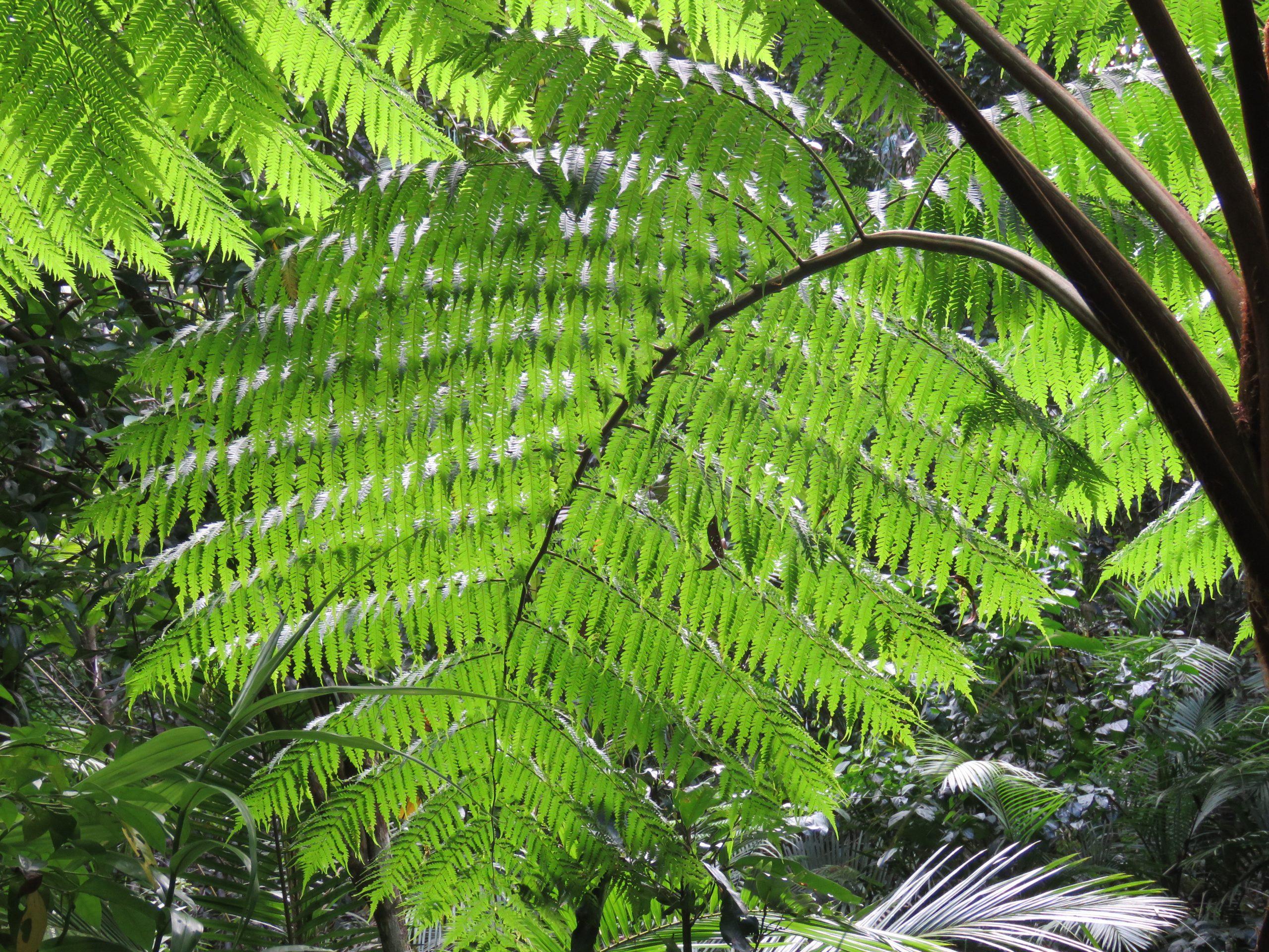 foresta pluviale daintree